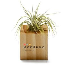 Connected Workspace Giveaway: Air Plant with logo on base cube